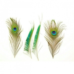 """12"""" Mixed Peacock Feathers"""