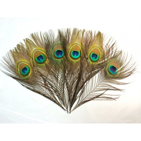 "10-12"" Peacock Eye Feathers"