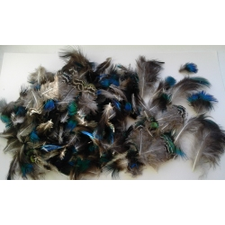 Peacock Plumage Feathers 5-8cm