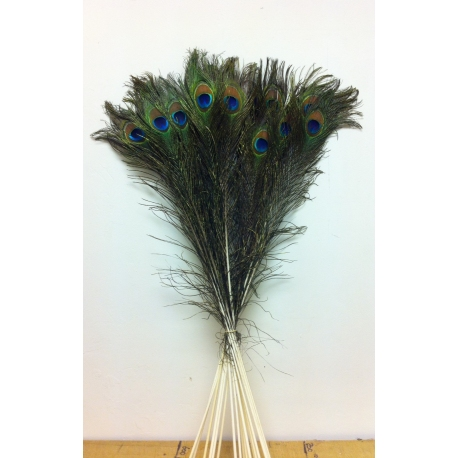 "30-35"" Peacock Eye Feathers"