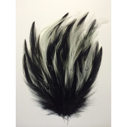 Lady Amherst & Dyed Guinea Feather Pad